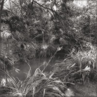 SALLY GALL (American, b. 1956) Suite of Six Photographs: Rio Botanical Garden 1; Rio Botanical Garden 3; Loire;