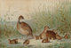 ALEXANDER POPE (American, 1849-1924) Family of Quail, 1878 Chromolithograph 14 x 20 inches (35.6 x 50.8 cm) Signed l