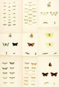 Books:Prints & Leaves, [Butterflies/Moths]. Group of Forty-Five Hand-Colored andLithograph Plates Depicting Various Species of Butterflies andMoths...
