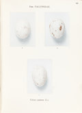 "Books:Natural History Books & Prints, A. A. van Pelt Lechner. ""Oologia Neerlandica"". Eggs of Birds Breeding in the Netherlands. The Hague: Martinus Nijh... (Total: 2 Items)"