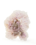 Minerals:Cabinet Specimens, AMETHYST. Brazil. 8.70 x 7.48 x 2.14 inches (22.1 x 19 x 5.46cm). ...