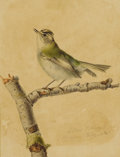 Fine Art - Painting, European:Antique  (Pre 1900), ESTHER CORBON (Nineteenth Century). Warbler. Ink andwatercolor on paper. 4-1/2 x 6-1/2 inches (11.4 x 16.5 cm). Sig...