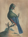 Fine Art - Painting, European:Antique  (Pre 1900), BRITISH SCHOOL (19th Century). Bird Portraits (two works).Watercolor on convex paper, each. 9-7/8 x 7-1/2 inches (25.1 ...(Total: 2 Items)