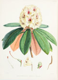 Books:Natural History Books & Prints, Joseph Dalton Hooker. The Rhododendrons of Sikkim-Himalaya;Being an Account, Botanical and Geographical, of the Rhodode...