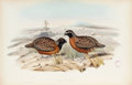 Books:Natural History Books & Prints, John Gould. A Monograph of the Odontophorinae, or Partridges of America. London: Printed by Richard and John E. ...