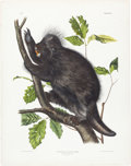 Books:Natural History Books & Prints, John James Audubon. Hystrix Dorsata - Plate XXXVI (Bowen Edition). Lithograph of the Canada Porcupine, hand-colo...