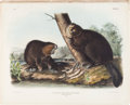 Books:Natural History Books & Prints, John James Audubon. Castor Fiber Americanus - Plate XLVI (Bowen Edition). Lithograph of American Beaver, hand-co...