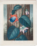 Books:Natural History Books & Prints, Robert John Thornton. The Winged Passion Flower.Hand-colored (with color printing) aquatint engraving by Warner...