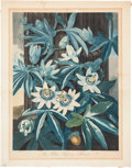 Books:Natural History Books & Prints, Robert John Thornton. The Blue Passion Flower. Hand-coloredaquatint engraving by Caldwell. 1800. In good condit...