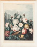 Books:Natural History Books & Prints, Robert John Thornton. Roses. Hand-colored aquatint engravingby Earlom. 1805. In very good condition with minor ...