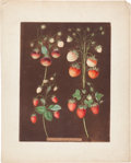 Books:Natural History Books & Prints, George Brookshaw (1751-1823). Three Prints: Strawberries. [and:]Peaches - Plate XXVI. [and:] Grapes - Plate LIV. Th...
