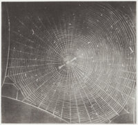 VIJA CELMINS (American, b. 1939) Untitled (Web 2), 2001 Mezzotint 7 x 7-5/8 inches (17.8 x 19.3 c