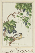 Fine Art - Painting, Russian, CHINESE/FRENCH SCHOOL (18th Century). Botanical Studies(four works), circa 1770. Engravings with hand coloring. 12-1/2 ...(Total: 4 Items)