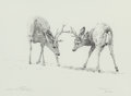 Fine Art - Work on Paper:Drawing, DINO PARAVANO (Italian/American, b. 1935). Squaring Up, MuleDeer, 1992. Pencil on paper. 9-1/2 x 13 inches (24.1 x 33.0...