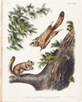 Books:Natural History Books & Prints, John James Audubon. Pteromys Sabrinus - Plate CXLIII (BowenEdition). Lithograph of Severn River Flying Squirrel...