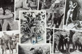 """Movie/TV Memorabilia:Photos, A Maureen O'Sullivan Personally-Owned Collection of Black and White Stills from """"Tarzan Finds a Son!""""..."""