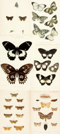 Books:Prints & Leaves, [Butterflies/Moths]. Group of Thirty-Four Chromolithographic PrintsDepicting Various Species of Butterflies and Moths. [N.p...