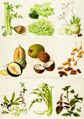 Books:Prints & Leaves, [Botanical Illustrations]. Large Lot of Color Plates DepictingVarious Types of Flowers, Fruits and Plants. Various publishe...