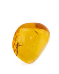 Amber, AMBER with INCLUSION. Hymenaea protera. Oligocene. Dominican Republic. 1.24 x 1.03 x 0.67 inches (3.15 x 2.62 ...