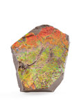 Fossils:Cepholopoda, AMMOLITE FOSSIL. Placenticeras sp.. Cretaceous, BearpawFormation. Southern Alberta, Canada. 4.72 x 3.46 x 0.95 inches(12...
