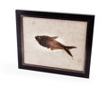 Fossils:Fish, FRAMED FOSSIL FISH. Diplomystus sp.. Eocene Age.Green River Formation. Wyoming. 11.41 x 9.44 x0.88 inche...