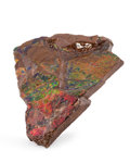 Fossils:Cepholopoda, AMMOLITE FOSSIL. Placenticeras sp.. Cretaceous, BearpawFormation. Southern Alberta, Canada. 4.47 x 3.91 x 0.66 inches(11...
