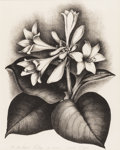Texas:Early Texas Art - Drawings & Prints, VERDA LIGON (1902-1970). Plantation Lily, 1930s. Lithograph.14in. x 11in.. Signed lower right. Titled lower left. Ver...