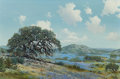 Texas:Early Texas Art - Regionalists, WILLIAM A. SLAUGHTER (American, 1923-2003). Old Oak Tree on aBluebonnet Hillside. Oil on canvas. 24 x 36 inches (61.0 x...