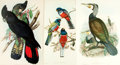 Books:Prints & Leaves, J. Gould. Group of Eight Large Reproduction Prints of Works by J.Gould. Various publishers and dates. ...