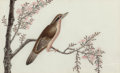 Fine Art - Painting, American, CHINESE SCHOOL (Early 19th Century). Birds and Flowers (nineworks). Watercolor on pith, each. 6-1/4 x 10-1/4 inches (15...(Total: 9 Items)