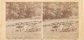 """Photography:Stereo Cards, Gardner Stereoview: """"Harvest of Death""""...."""