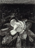Fine Art - Painting, Russian, MORTON KAISH (American, b. 1927). Magnolia Grandifloria II,1982. Charcoal and pastel on arches paper. 29-3/4 x 22-1/4 i...