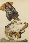 Fine Art - Painting, American, After JOHN JAMES AUDUBON (American 1785-1851). Red TailedHawk, 1829. Handcolored engraving with etching and aquatint.3...
