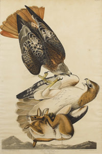 After JOHN JAMES AUDUBON (American 1785-1851) Red Tailed Hawk, 1829 Handcolored engraving with etchi