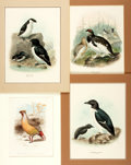 Books:Prints & Leaves, [Ornithology]. Group of Four Engraved Prints with Hand-ColoringDepicting Various Birds. Various publishers and dates. ...