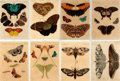 Books:Prints & Leaves, [Moths and Butterflies]. Group of Eight Laminated Engravings withHand-Coloring Depicting Various Moths and Butterflies. [N....(Total: 8 Items)