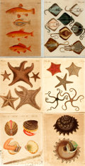 Books:Prints & Leaves, [Natural History]. Group of Six Engravings with Hand-ColoringDepicting Various Aquatic Animals. [N.p., circa 1800]. ... (Total:6 Items)