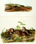 Books:Prints & Leaves, John James Audubon. Pair of Hand-Colored Folio Engravings. PlatesXLIV and LXXV from The Viviparous Quadrupeds of North Am...