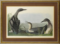 Decorative Prints, American:Prints, An American Hand Painted Engraving: Black Throated Diver.After John James Audubon (1785-1851), New York, New ...