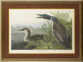 Decorative Prints, American:Prints, An American Hand Colored Engraving: Great Northern Diver or Loon. After John James Audubon (1785-1851), New York, New Yor...