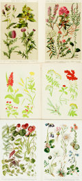 Books:Prints & Leaves, [Botanical Illustration]. Group of Twenty-Two Color PlatesDepicting Various Plant Species. Various publishers, circa 1900....
