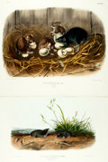 Books:Prints & Leaves, John James Audubon. Pair of Hand-Colored Folio Engravings. PlatesXXIII and LXXIV from The Viviparous Quadrupeds of North ...