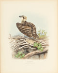 Books:Natural History Books & Prints, Edward Thomas Booth. [Edward Neale, illustrator]. Rough Notes on the Birds observed during twenty-five years' shooting a... (Total: 7 Items)