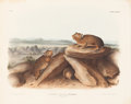 Books:Natural History Books & Prints, John James Audubon. Lagomys Princeps - Plate LXXXIII (Bowen Edition). Lithograph of the Little Chief Hare, hand-...