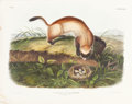 Books:Natural History Books & Prints, John James Audubon. Putorius Nigripes - Plate XCIII (BowenEdition). Lithograph of the Black Footed Ferret, hand...
