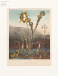 "Books:Natural History Books & Prints, Robert John Thornton (1768-1837). ""American Bog-Plants"" Hand Finished Aquatint Engraved by Sutherland After a Work by Reinagte..."