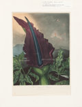 """Books:Prints & Leaves, Robert John Thornton (1768-1837). """"The Dragon Arum"""" Hand Finishedand Color-Printed Mezzotint Engraved by William Ward After a..."""