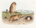 Books:Natural History Books & Prints, John James Audubon. Spermophilus Ludovicianus - Plate XCIX (Bowen Edition). Lithograph of the Prairie Dog - Prai...