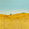 Fine Art - Painting, American:Contemporary   (1950 to present)  , Duane Albert Armstrong (American, b. 1938). Landscape withWheat, 1968. Oil on canvas. 50 x 50 inches (127 x 127 cm).Si...