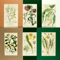 Books:Prints & Leaves, [Botanical Illustration]. Group of Six Eighteenth-CenturyHand-Colored Engraved Plates Depicting Various Species of Flowering...